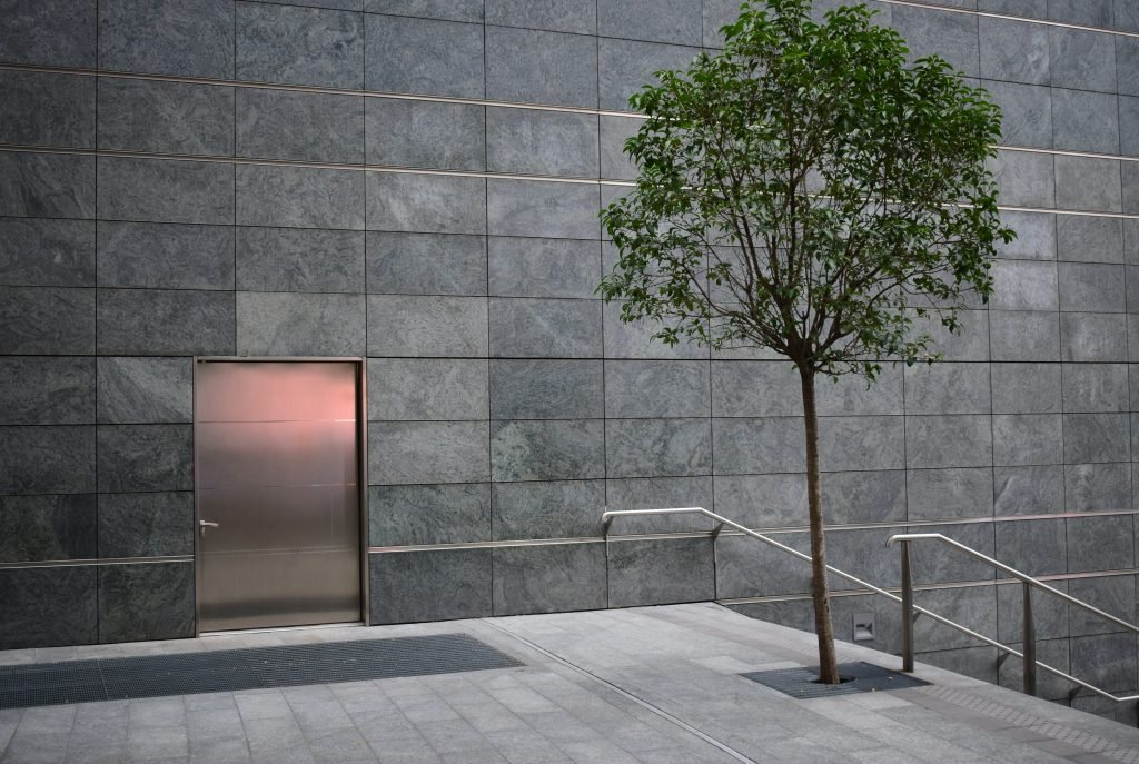 Modern tree with tree grate