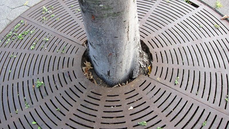 Cast Iron Tree Grate Hudson Park