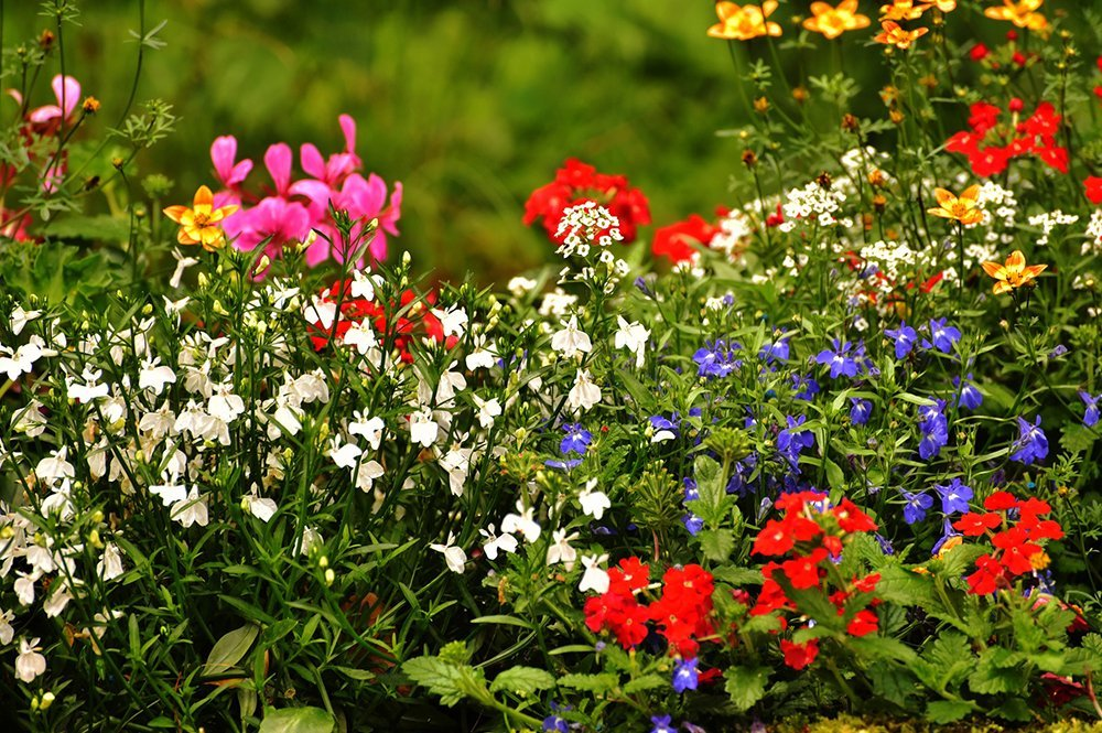Comparing French Vs English Garden, Flowers Gardens And Landscapes