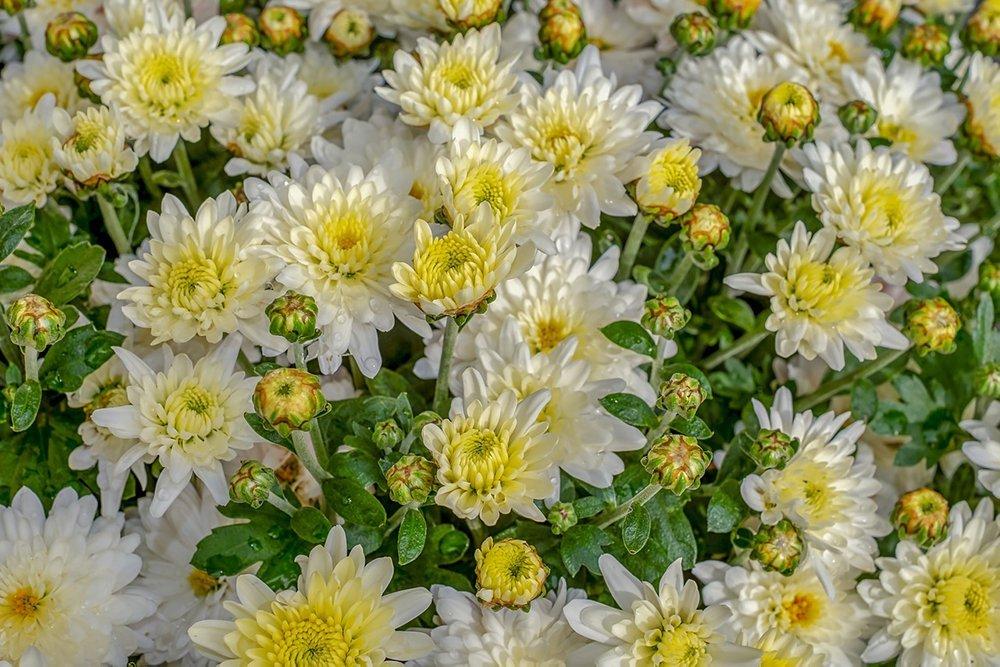 fiori di novembre