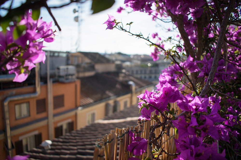 flowers on rooftop