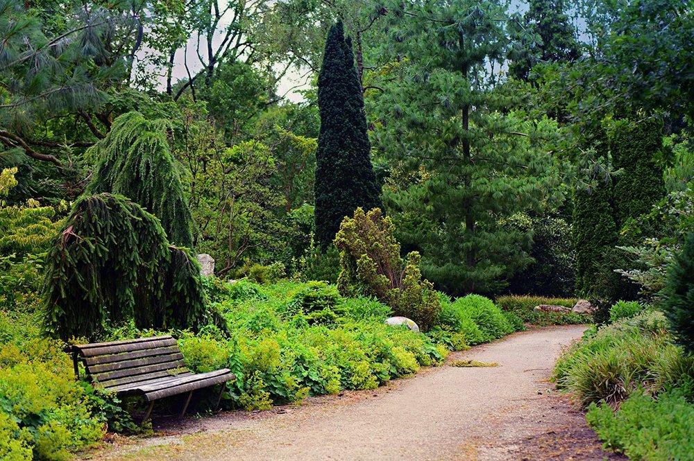 pathways with plants