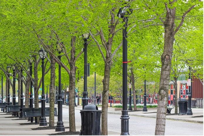Treelined street