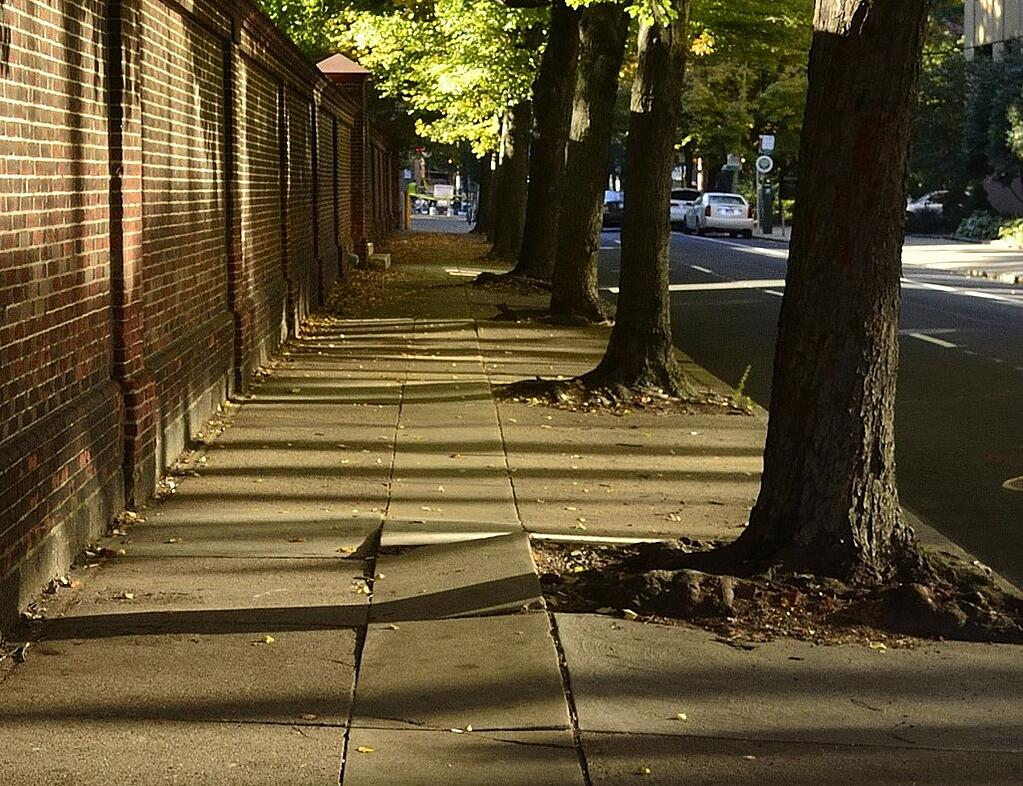 Trees without grates posing dangers