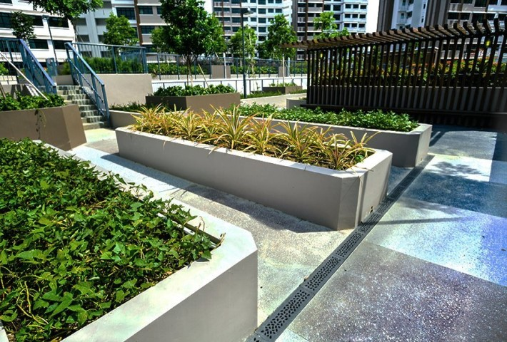 Linear drains with plants